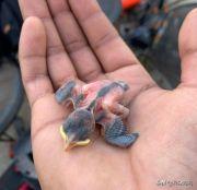 15个被拯救的小动物