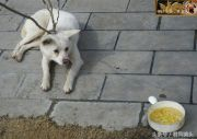 湖北宜昌:动物趣闻,土狗睡在街头晒太阳,不想吃鸡蛋饭!