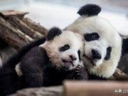 动物园里最可爱的小动物们(20张图片)