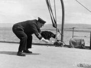 军事趣闻:猫咪和海军的不解之缘