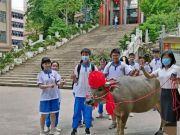 学生高考654分,家长送牛感谢学校,网友:牛气冲天