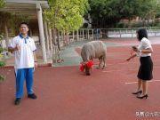 儿子高考考了654分,家长送牛去学校