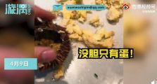 游客三亚吃海胆蒸蛋没海胆还遭威胁:小心走不掉