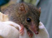 世界上交配时间最长的动物,时间可达14小时,直到死才会停止!