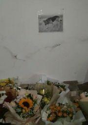 重庆多人献花祭奠被击毙的疯狗,几天前被狗咬死的男孩还尸骨未寒