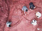 云南禄丰发现一具8米长恐龙化石(图)
