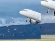 海鸥被吸入挪威客机瞬间蒸发