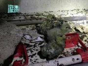 惨不忍睹!7000多小鸡被烧死,小鸡叫声让人心痛