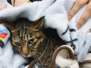 """从 12 斤瘦到 2 斤,""""猫坚强""""无水无食存活 37 天后获救"""