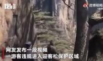 黄山景区回应游客闯迎客松保护区