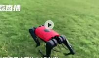 中国公司研发机器狗超越世界纪录 或推出平价版