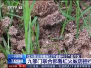红火蚁已传播至我国435个县市区,红火蚁如何防控?